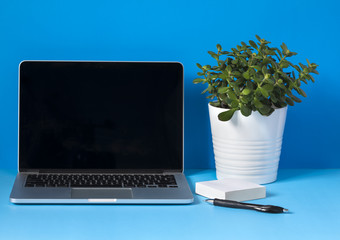 Laptop, flower in the pot, pen and papers on blue background.