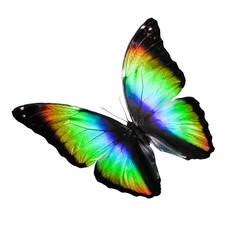 Бабочка с разноцветными крыльями в движении, изолирована на белом фоне