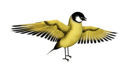 3D Rendering Songbird Goldflinch on White