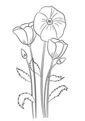 Summer flowers poppies coloring page, book for children and adults. Hand drawn. Vector illustration.