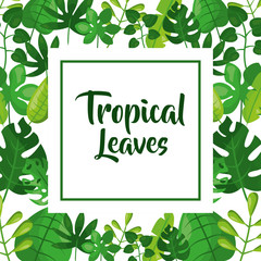 tropical leaves exotic plant frame decoration vector illustration