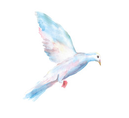 Watercolor hand drawn sketch illustration of dove in flight isolated on white