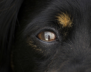 Close-up Of A Dog Eye
