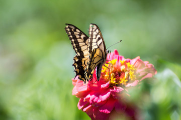Yellow Butterfly Standing On A Pink Flower