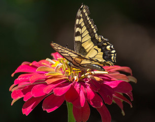 Butterfly Standing On A Pink Flower