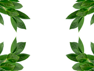 Green leaves or green plants isolated on white background, select focus with clipping path texture background.