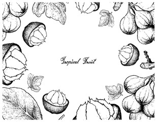 Hand Drawn Frame of Sweet Ripe Santol and Cluster Fig Fruits