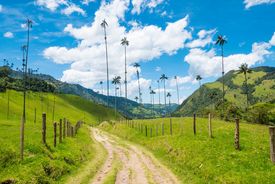 Colombia Salento district Cocora valley path among the tallest palm trees in the world with blue sky