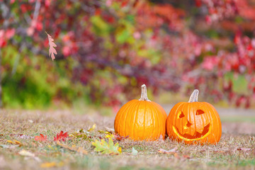 Halloween pumpkins outside. pumpkin patch. curved pumpkin on the farm field. The concept of preparation for Halloween. Copy space for your text