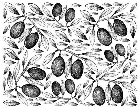 Hand Drawn Background of Fresh Olive Fruits