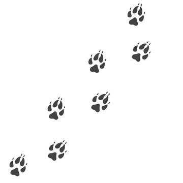 Vector illustration. Fox Paw Prints Track Logo. Black on White background. Animal paw print with claws.