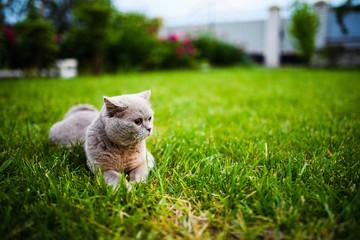 Cute cat on green grass