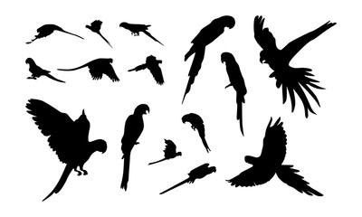 set of Various macaw bird silhouette vector illustration