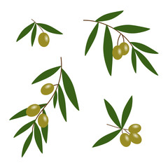 green olives branches with green leaves oil icon set vector