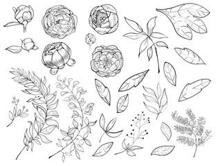 A set of botanical pions