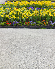 Blumenbeet mit Trompeten-Narzissen