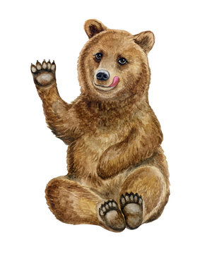 Cheerful playful brown bear isolated on white background. Watercolor. Illustration. Template