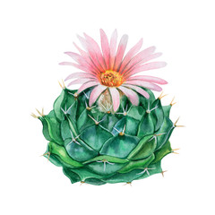 Flowering cactus isolated on white background. Watercolor. Illustration. Template. Handmade. Close-up.