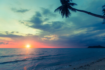 Palm tree silhouette on a tropical sea beach during amazing sunset.