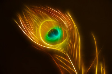 phoenix, bird feather