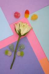 Composition with roses and chewing sweets isolated on a multi-colored background