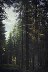 Waldlichtung in Winterberg / Ruhrquelle