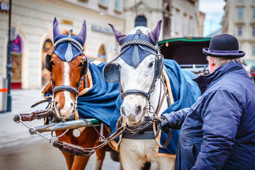 Horses waiting to tourists around the beautiful city of Vienna, horses with vintage cab are famous iconic landmark in Vienna, Austria.