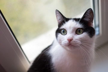 black and white cat on the window