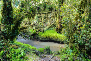 Enchanted Forest, Queulat National Park, Chile