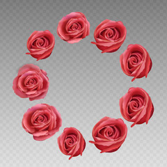 Rose on a transparent background. Rose vector illustration. Red Rose. flower rose