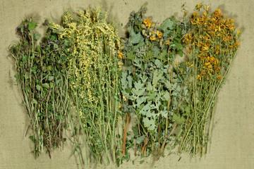 . Dried grass for use in alternative medicine