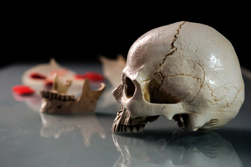 Cloae up of human skull no lower jaw