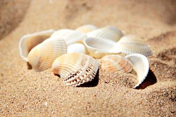 A pile of seashells on the sand of beach.