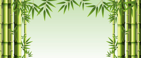 Background template with green bamboo