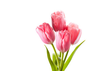 Beautiful pink tulips bouquet isolated on white background, floral wallpaper