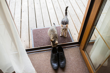 Black men's leather shoes are standing on the threshold. Two stray cats sniff men's shoes. Wedding details.