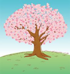 手描き風イラスト 満開の桜の木 ソメイヨシノ 春のイメージのイラスト