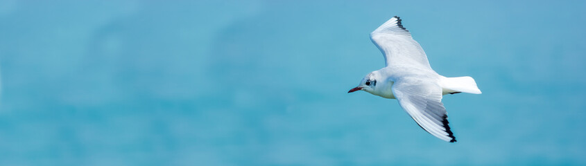 White seagull in the sky against a background of blue sea. Sea bird. Summer. Fly. Space for text.