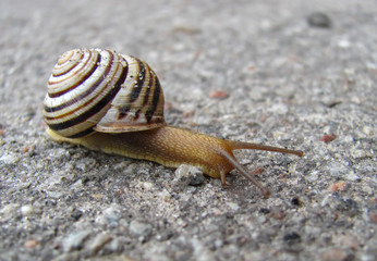 snail on the asphalted road