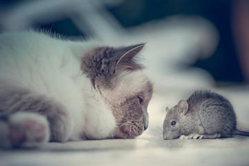 Amici nemici