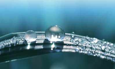 Wall Mural - Beautiful large transparent drop of water dew on grass close up. Natural background.