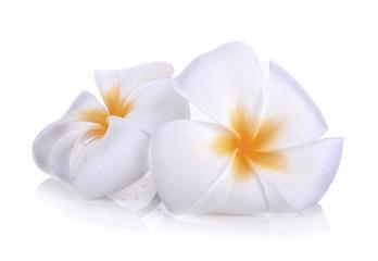 Tuinposter Frangipani White plumeria flower isolated on white background