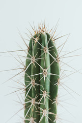 Foto auf Acrylglas Kakteen cactus with white background