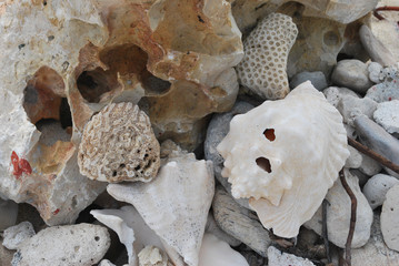 Group of sea shells with more shells in background