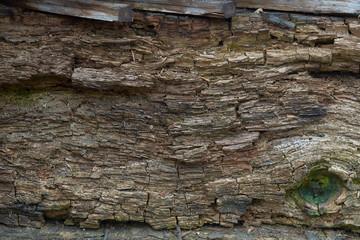 deseń drewna, tło do fotografii tło z drewna studio, fotografia tło drewna, tekstura, barwa oliwka, struktura drewna, płotek do zdjęć