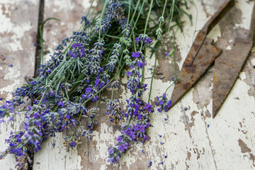 Close-up of bunch lavender on a white rustic table. Concept nostalgia and vintige style. Shallow depth of focus.