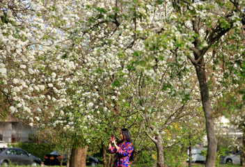 A girl takes a picture under flowering and blossoming trees along a roadside in Islamabad