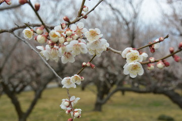 花/flower/梅