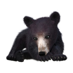 3D Rendering Black Bear Cub on White