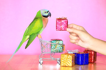 Fond de hotte en verre imprimé Perroquets Parrot on Model miniature shopping cart and Colorful gift box For Christmas and Happy New Year on Pink background